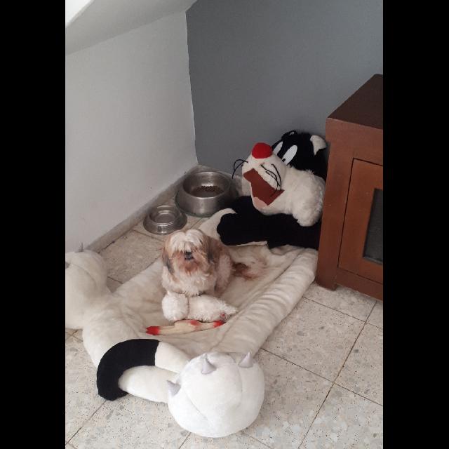 מיטה-לכלב-של-סילבסטר-מהלוני-טונס-(120-ס'מ) - יד 2